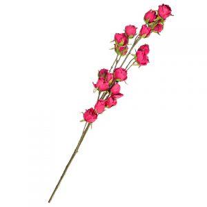 Роза Ярко-розовая